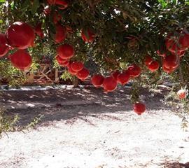 """קורס """"עתידים לחקלאות"""" בענפי הצומח. ינואר – יוני 2020"""